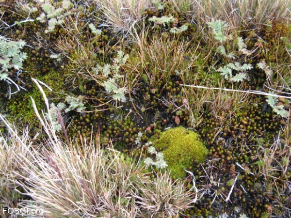 Moss, lichen and grass by Liz Pasteur