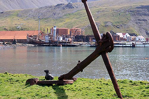 Grytviken. Photo Ruth Chaloner