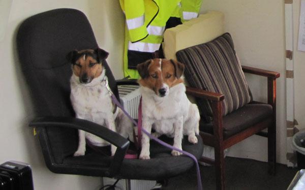img_0118_600px_dogsinstanleywillwaionofficechair
