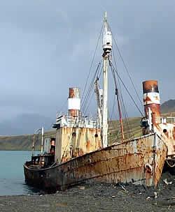 Dias at Grytviken.