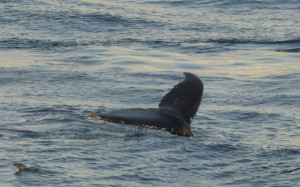 webP1000464_WhaleTail_byPhil
