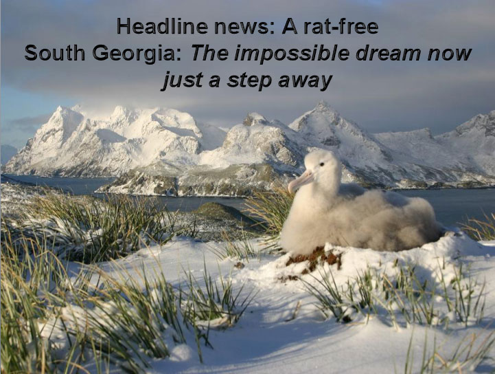 HeadlineNewRatFreeSG