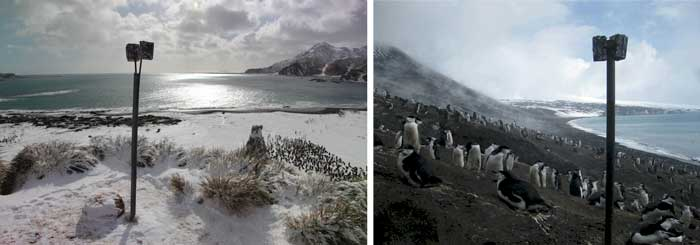 Penguin monitoring cameras. Photo Courtesy of TomHart, Penguin Lifelines.